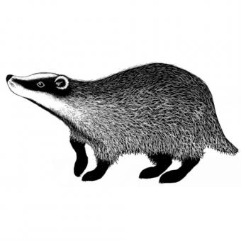 Lavinia Stamps - Badger 2
