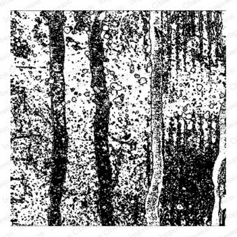 Cover-a-Card Forest Snow